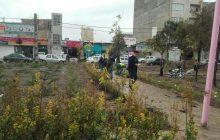 احداث 3 هزار و 800 متر مربع فضای سبز در حاشیه جاده ملارد