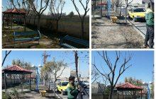 هرس کردن درختان پارک عطایی توسط شهرداری منطقه یک فردیس+تصاویر
